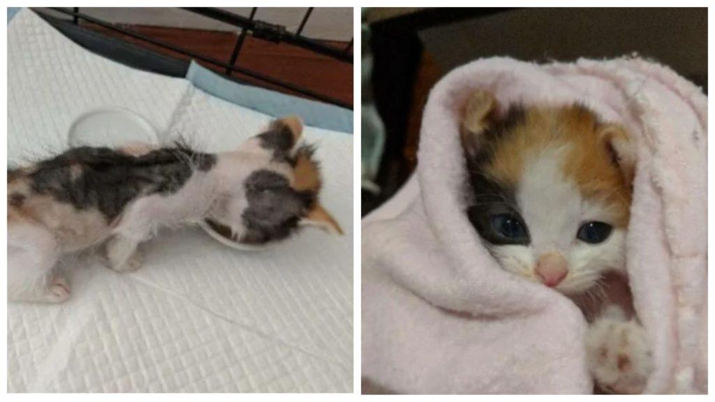 Всего год назад этот котенок был готов умереть от голода. Сейчас его не узнать