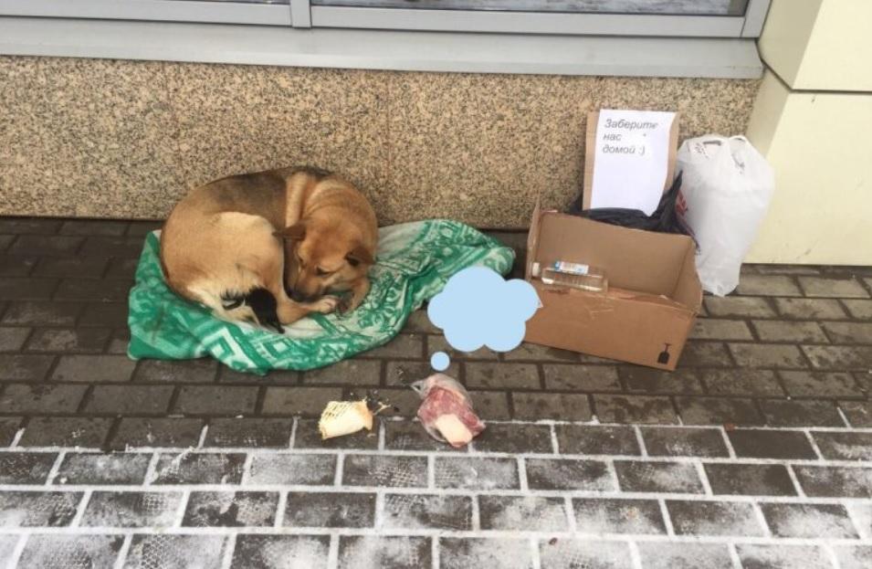 Мама собака с новорожденными щенками замерзали и могли погибнуть от холода