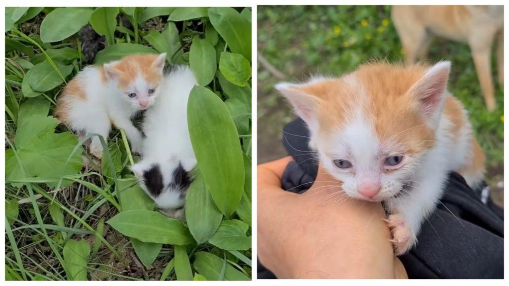 Девушка спасла  месячных котят, с которыми жестоко обошлись, оставив малышей в посадке на верную гибель