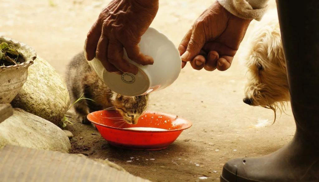 Фермер подкармливал приблудшего котёнка - а его верный пёс стоял и смиренно ждал, пока животное накушается