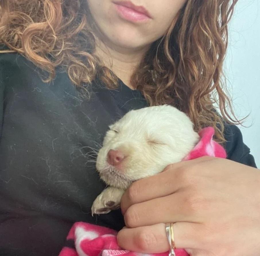 Маленький щенок ослеп после того, как его выбросили из движущегося автомобиля
