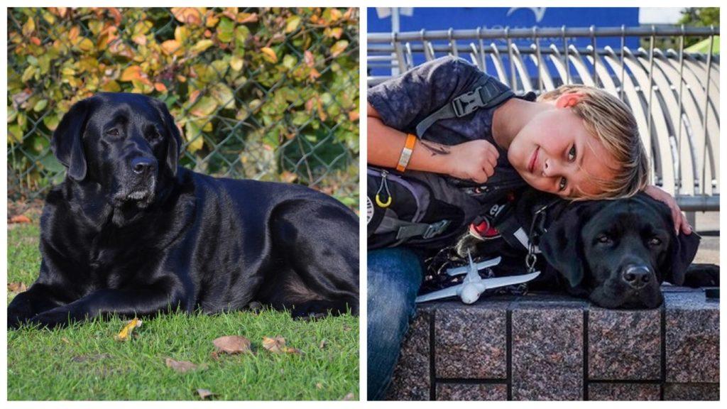 Собака Марта спасла школьника и обрела семью