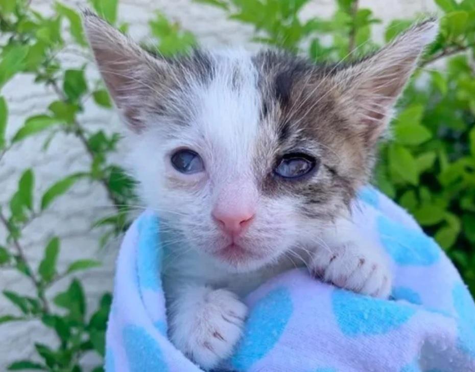 Слепой и весом всего 136 граммов, котенок узнал, что такое любовь и забота