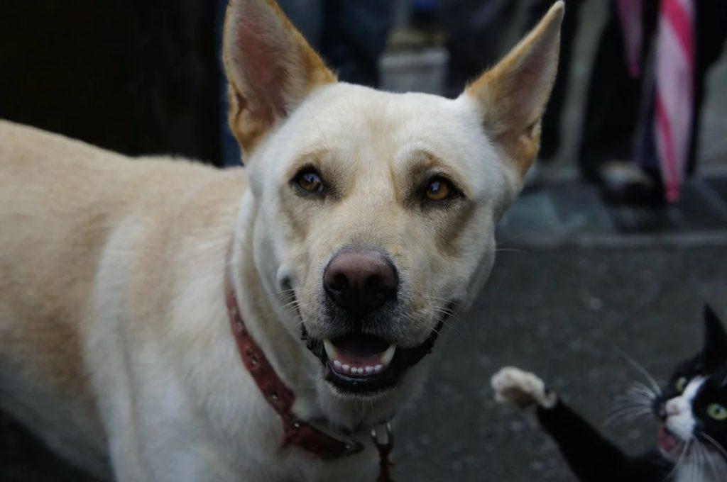 Домашний пёс встретил уличного кота - который тянул лапки и хотел забраться к нему на шею, чтобы крепко его обнять
