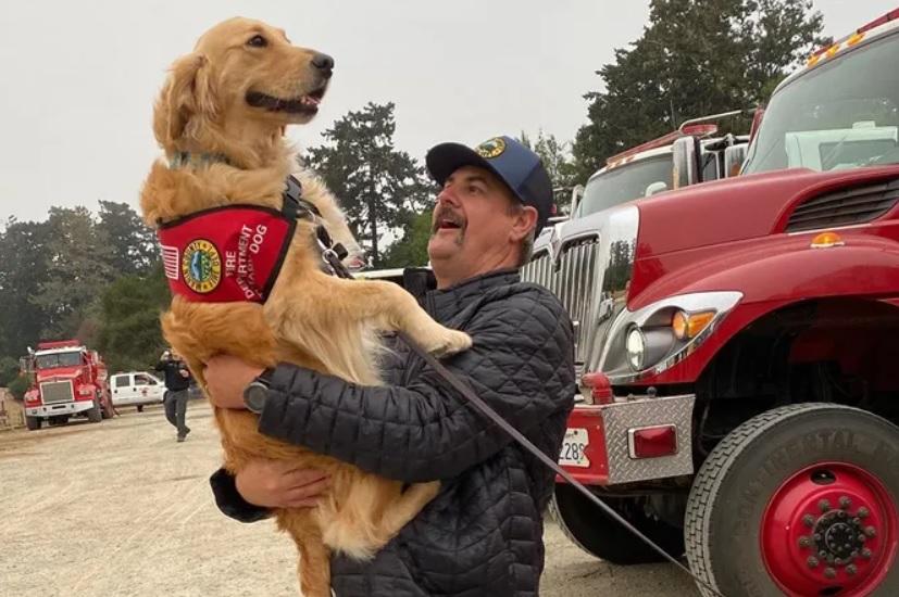 Собака породы золотой ретривер, обладая терапевтическими способностями, приносит счастье и радость людям