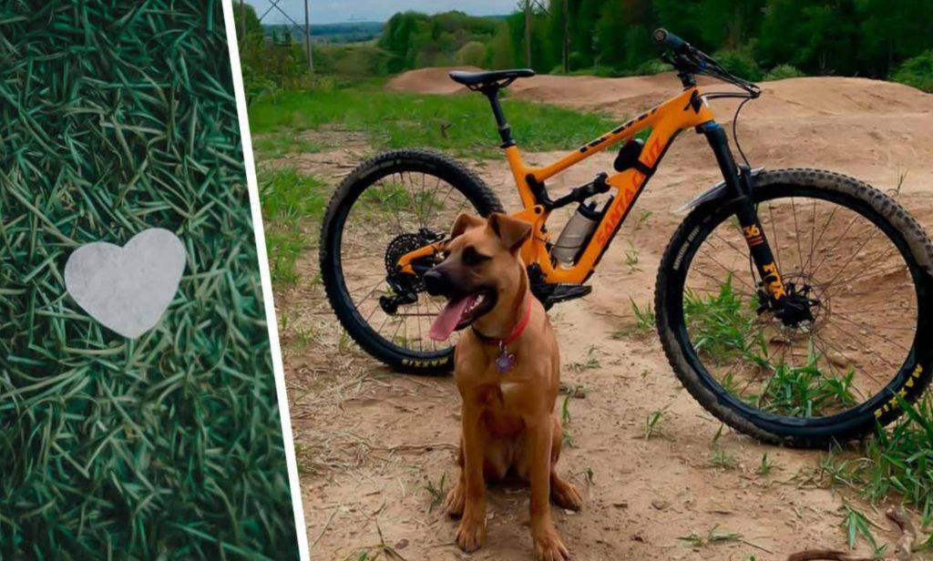 Пёс привел хозяина в лес: Увидев куда он его привёл - мужчина не смог сдвинуться с места