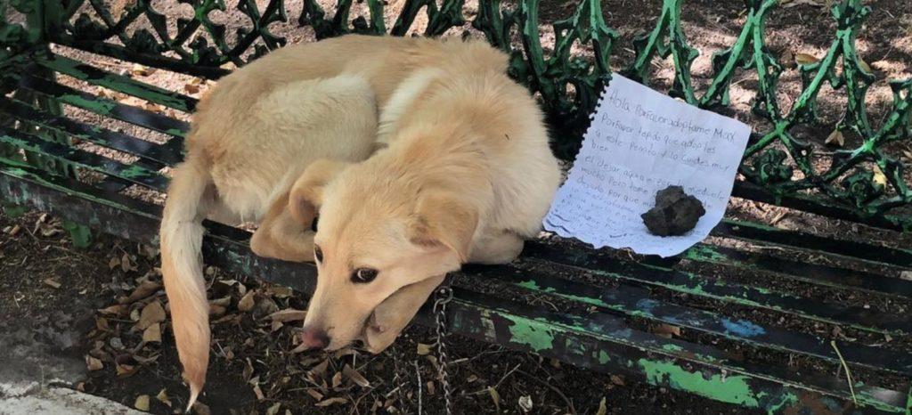 Привязанный к скамейке пес, ждал своего хозяина, но хозяин так не вернулся за ним