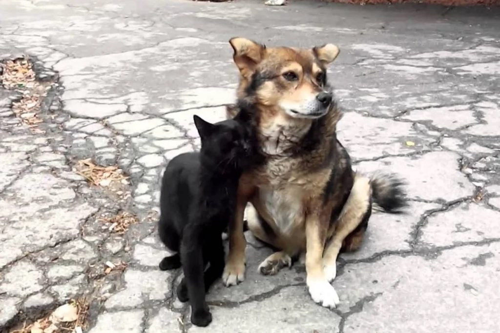 """Расстроенный пёс думал: """"А если кот Лохматый прав, и он действительно забыл, где закопал курицу"""""""