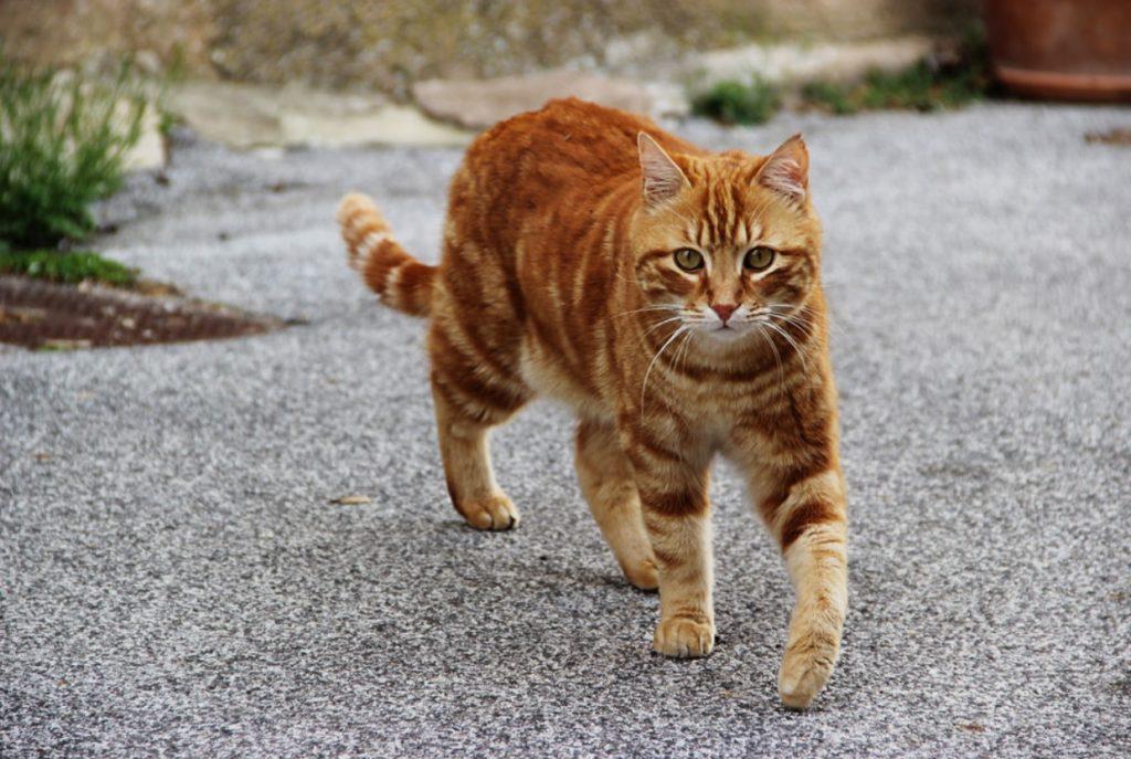 Кота чудом спасли: он словно застыл на проезжей части