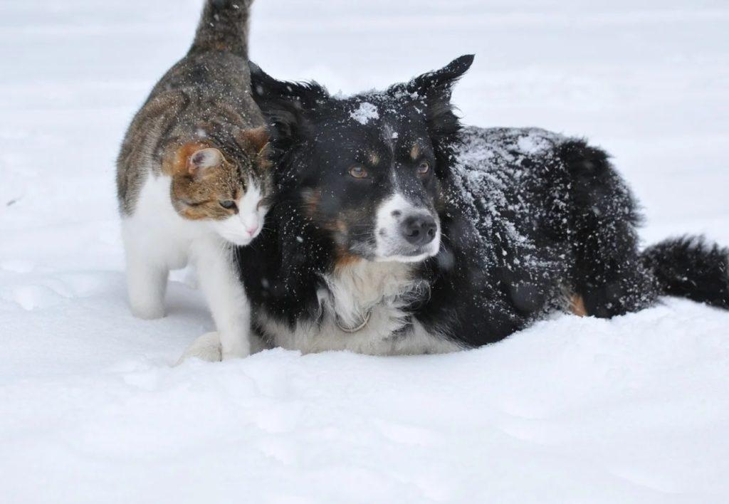 Вырыв яму из снега, уличный пёс со сбежавшей кошкой спали в ней, чтобы не замёрзнуть в мороз