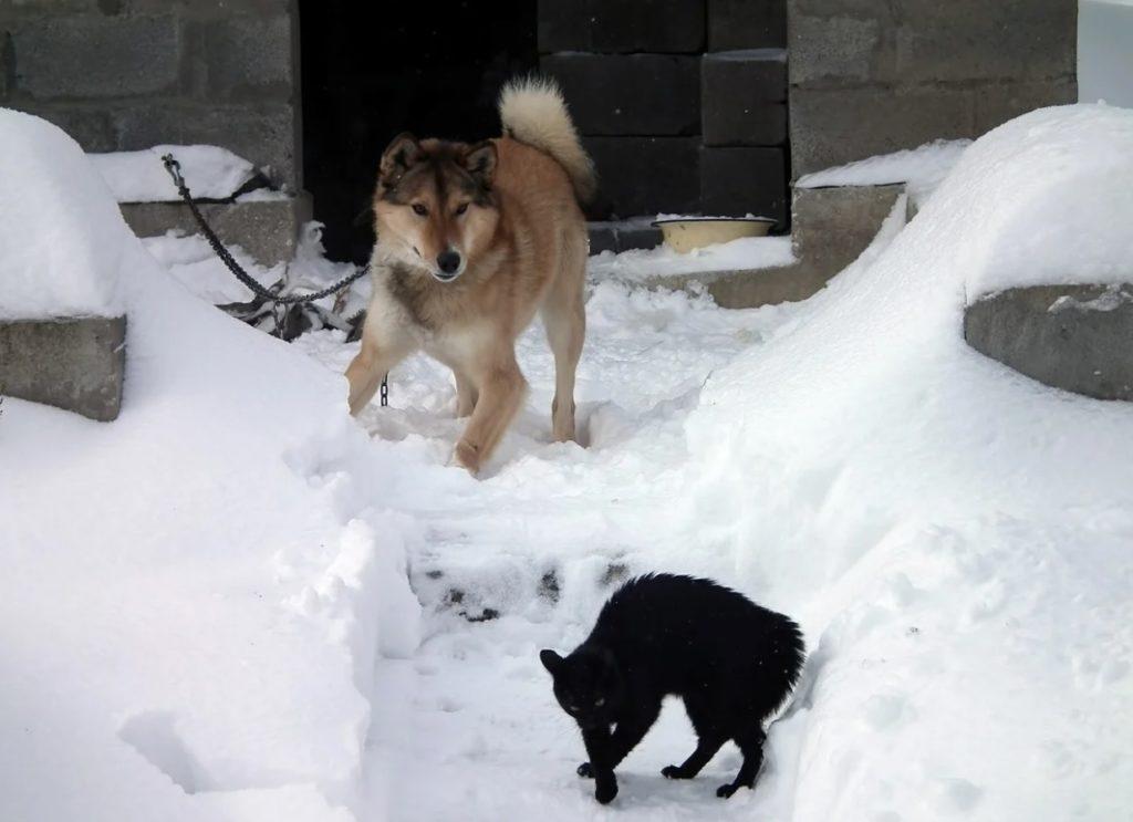Пёс сначала прогонял назойливого кота, а когда тот стал часто приходить, то привык к нему и стал подпускать его к дому
