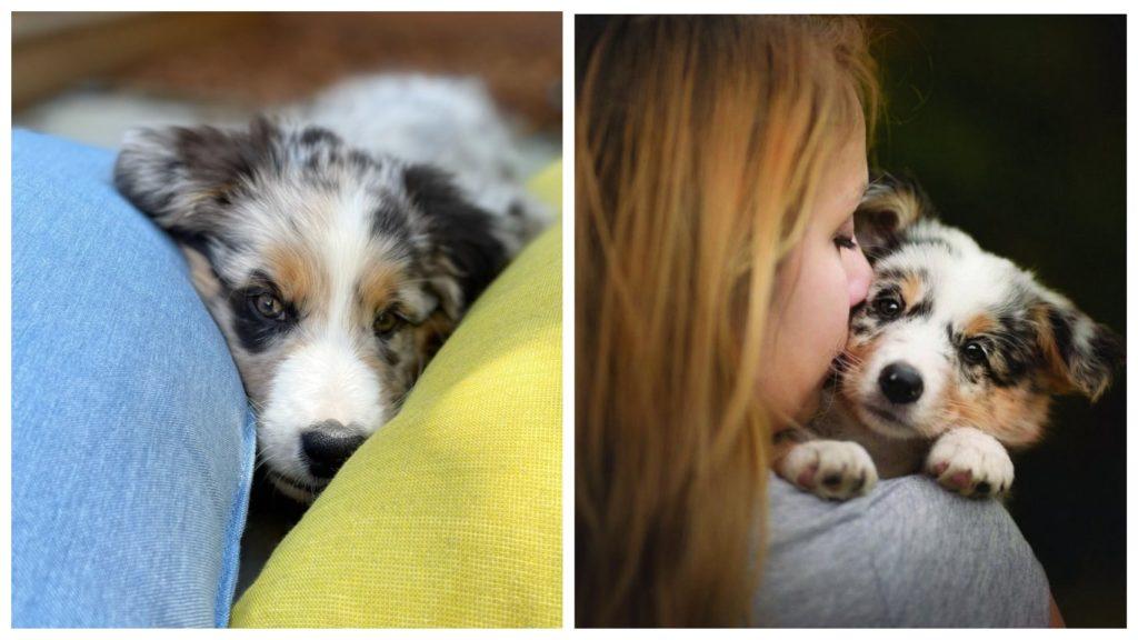 Девушка боролась за жизнь щенка, которого она нашла на мусорнике