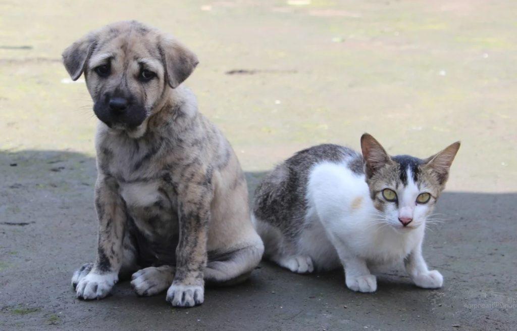 Щенка и котёнка привезли в мешке и оставили у дверей гаражей, где работал пункт приёма стеклотары