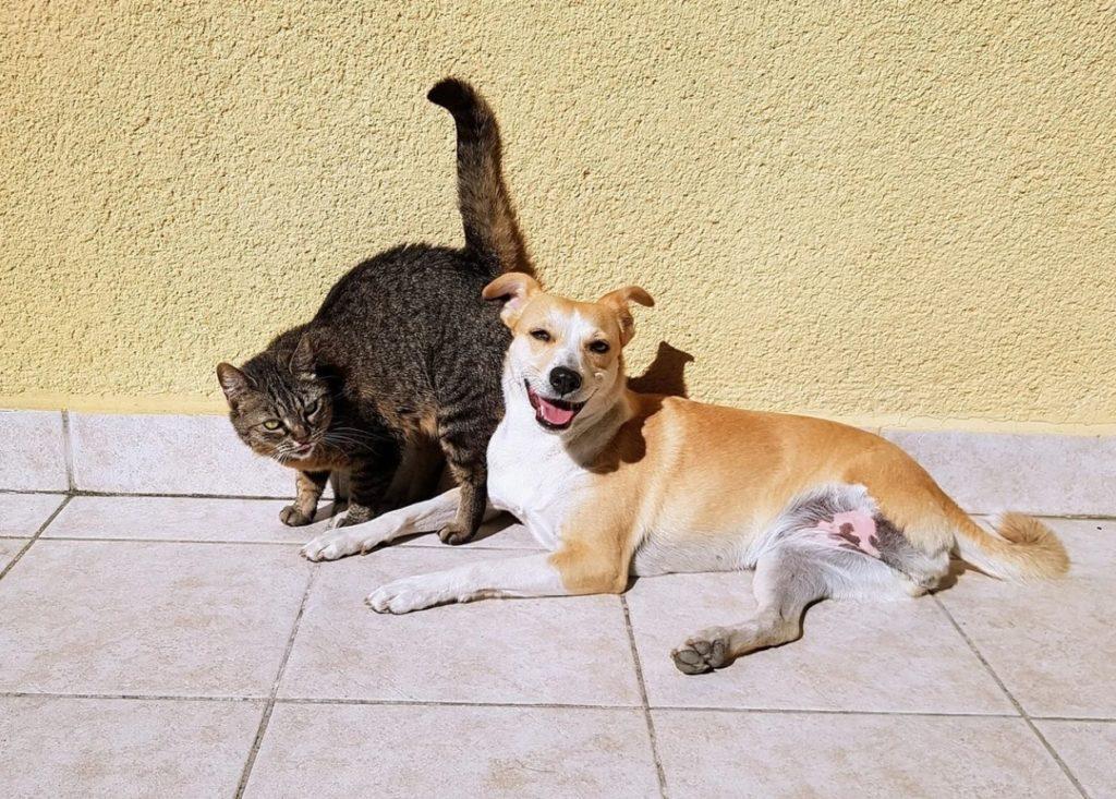 Пришлая кошка Мотька помогала справляться с трудностями трёхлапой собачке по кличке Мэри