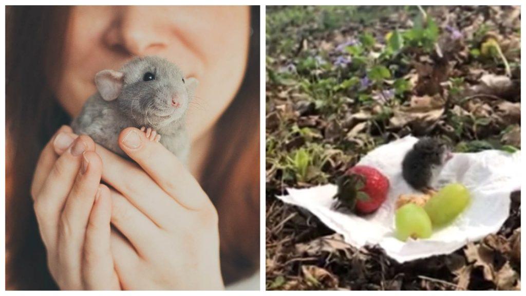 Женщина встречает мышь и приглашает ее на небольшой пикник