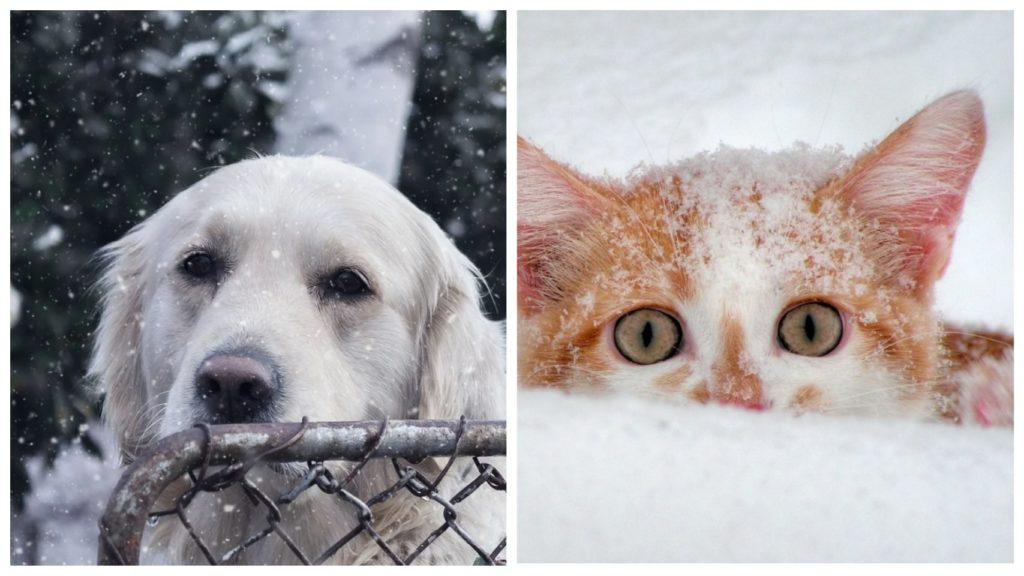 Пёс услышал под снегом писк и лапами выкопал котёнка - которого засыпало снегом после сильной метели
