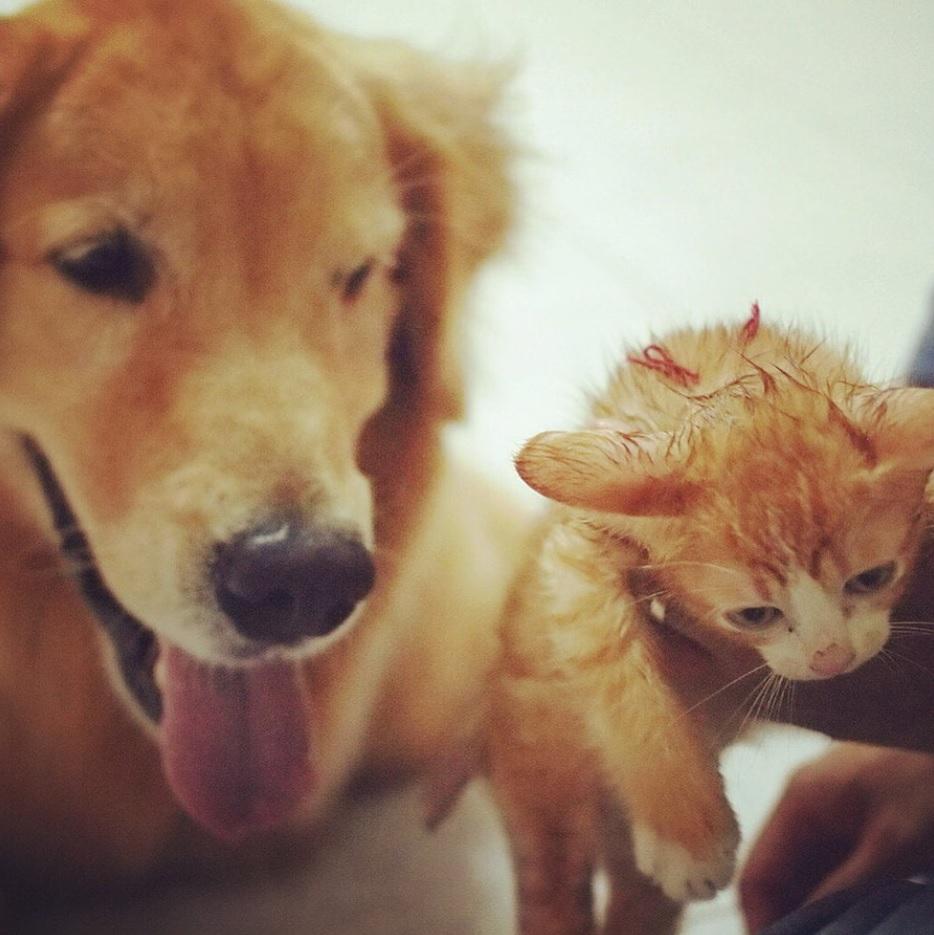 Пес спас тонущего маленького котенка и стал для него другом и заменил ему маму