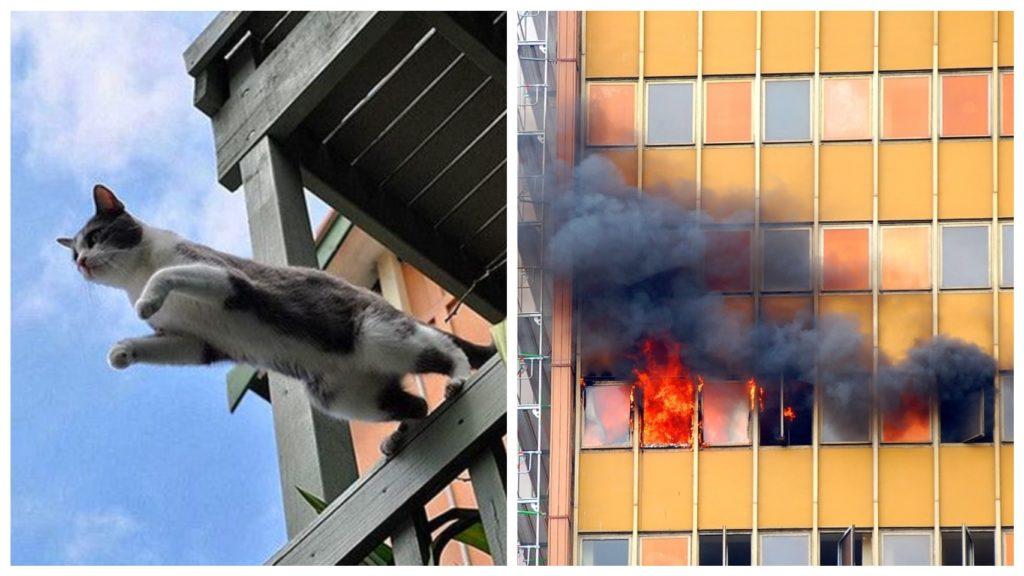 Во время пожара, кот спрыгнул с пятого этажа горящего здания и остался жив и невредим