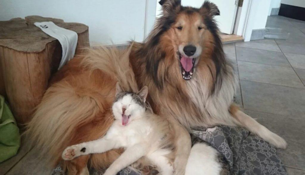 Коту недолго пришлось быть бродячим отшельником - ведь ему повезло оказаться в заботливых собачьих лапах Агаты