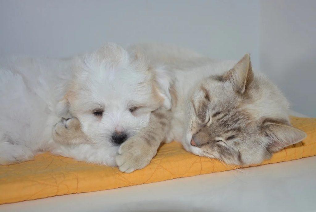 Промёрзшие домашние кот и пёс, сливаясь со снегом, сидели на переезде возле шлагбаума, свернувшись в один комочек