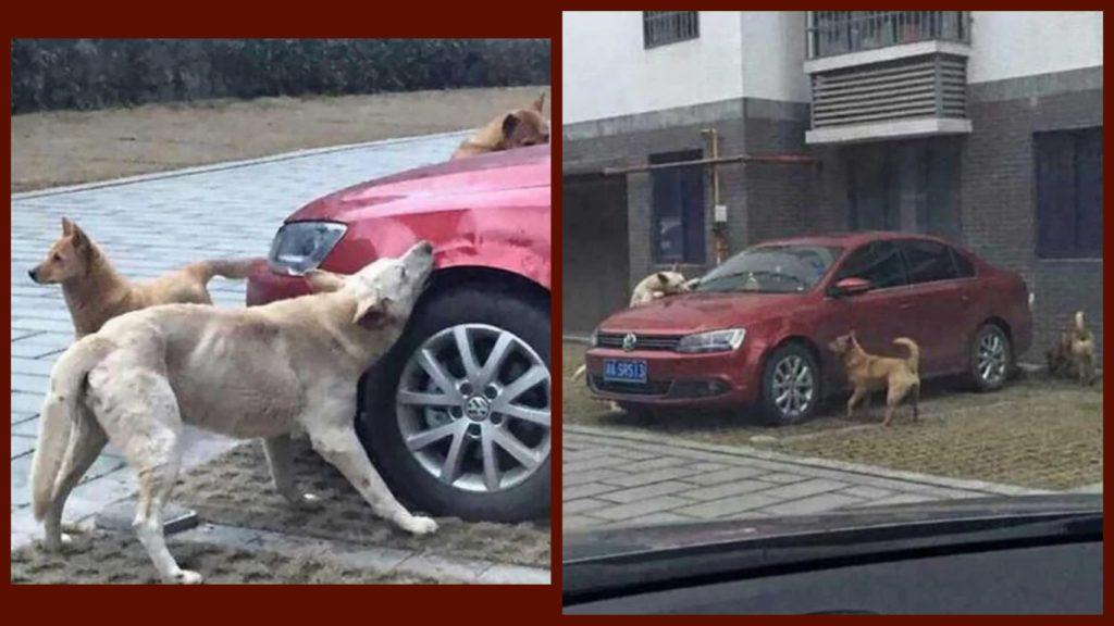 Водитель пинает собаку и несколько минут спустя собака возвращается с друзьями, чтобы отомстить