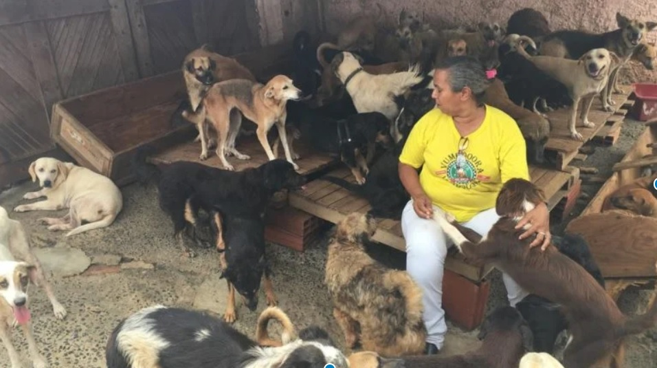 Женщина заботится о более чем 300 собак и 48 кошек, найденных на улице