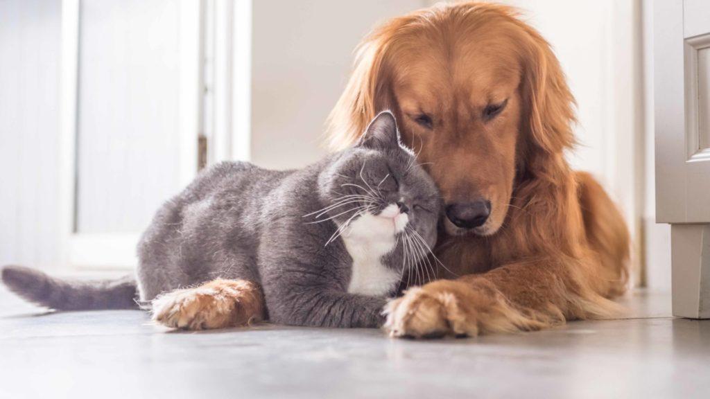Эта парочка кошка и песик - стали неразлучными друзьями