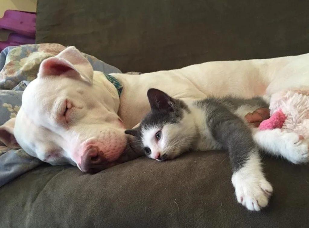 Котёнок приходил к спящему псу, ложился рядом и долго лежал с открытыми глазами, слушая его хриплое дыхание