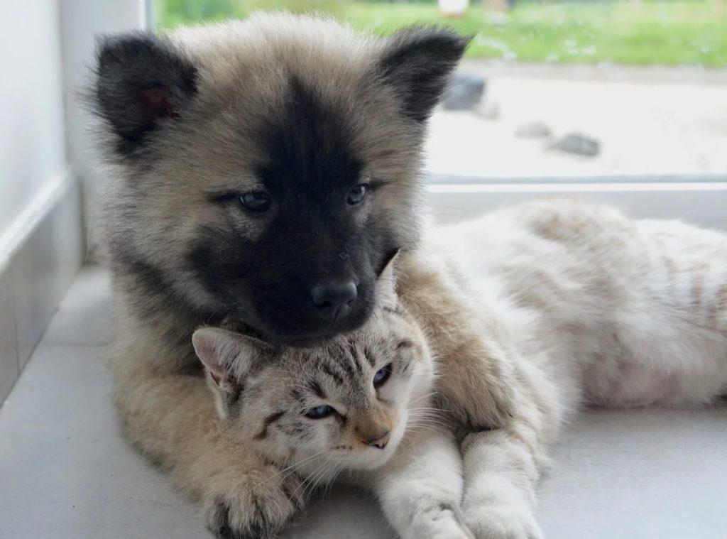 Осиротевший старый кот Пряник нашёл себе друга в лице маленького смешного щенка, такого же как он лохматого и плюшевого