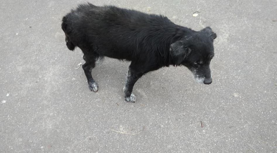 Безнадежно больной пес, благодаря усилиям и терпению новой хозяйки, стал ходить