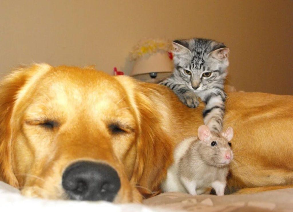 Как дружили котёнок Шузя, найденный на помойке, пёс Ханс, освобождённый из клетки, и крыс Мышоль, спрятавшийся под плинтусом