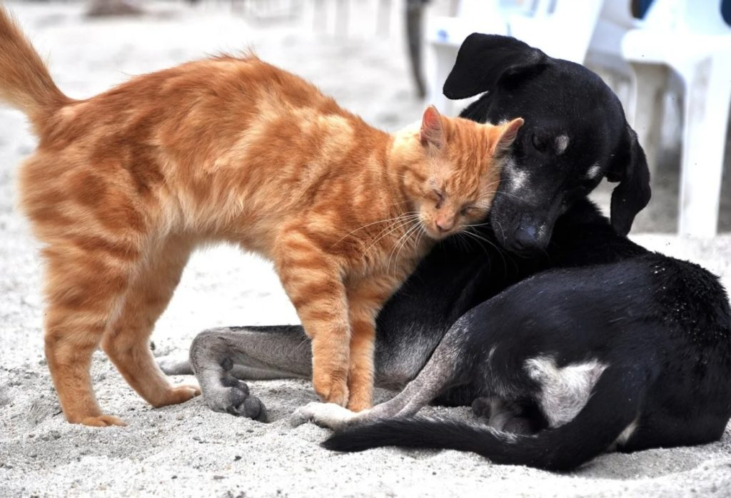 Пёс и кот жили рядом с уличным кафе и умиляли посетителей своей беззаветной дружбой