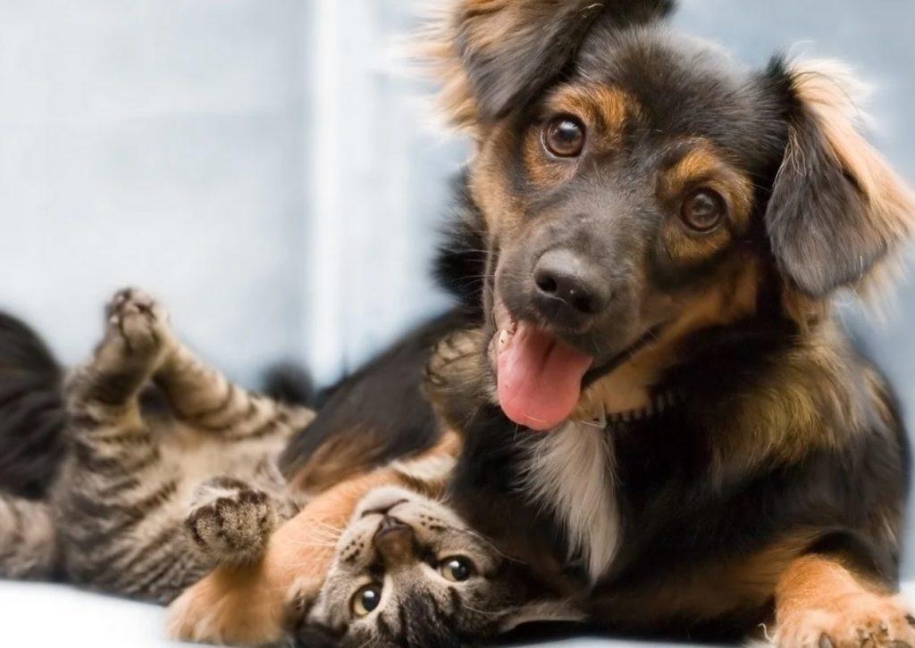 Пёс Чаплин сам выбрал себе друга-котёнка, которого хозяева не хотели забирать из отеля для животных
