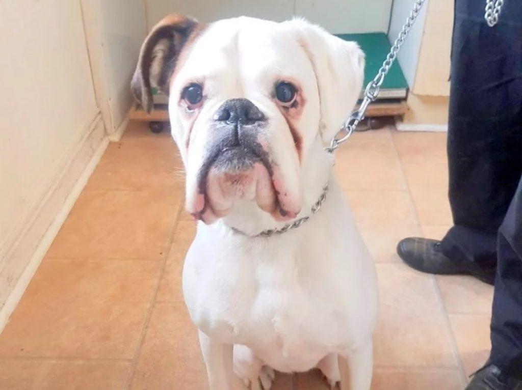 Человек бросил своего пса привязав к столбу и собака продолжала ждать его с грустными глазами