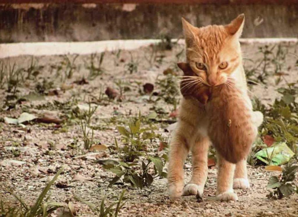 Кот стал настоящим волонтером