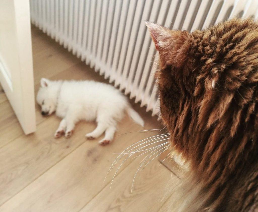 Кошка охраняла сон маленького щенка, словно родная мама - когда кто-то мог его разбудить, она не давала этого сделать