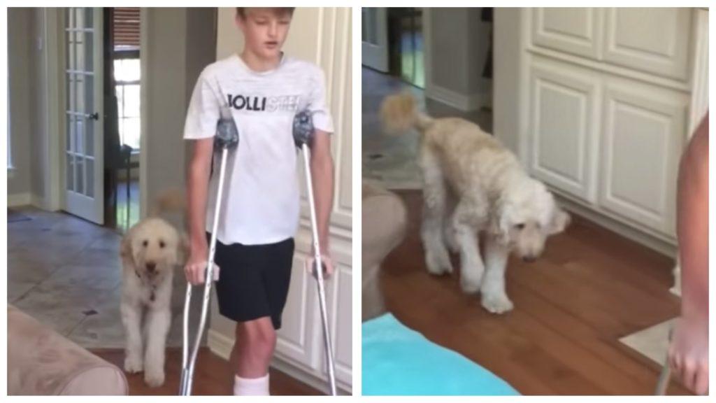 Собака ходит по комнате хромая, копирую хозяина который на костылях