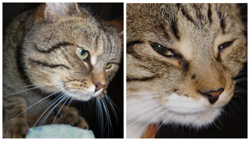 Молодой котик понимал, что возможно шансов выжить больше не будет - он собрался из всех сил...