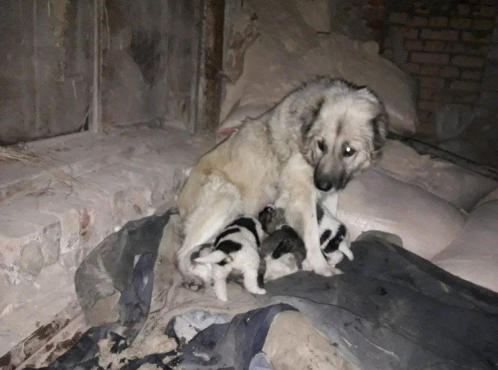 Девушка спасла от гибели собаку и ее восьмерых щенят