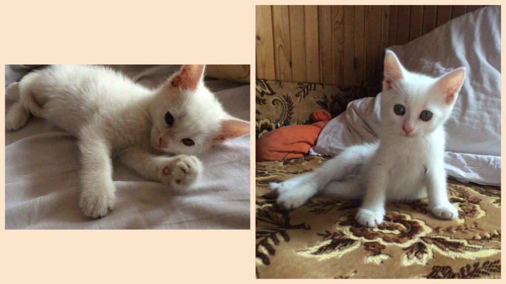 Девушка мечтала о коте породы Мейн-кун, а ей принесли котенка с поломанной лапкой