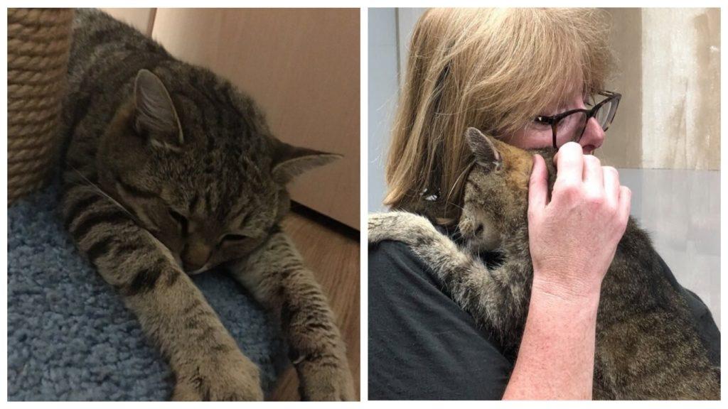 Пропавший во время пожара кот, через два года вернулся к своей хозяйке