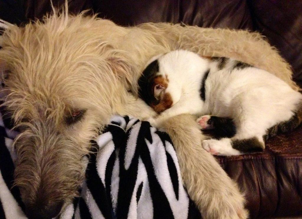 Пёс с синдромом бессонницы никак не мог заснуть без своей пушистой подруги-кошки по кличке Звёздочка