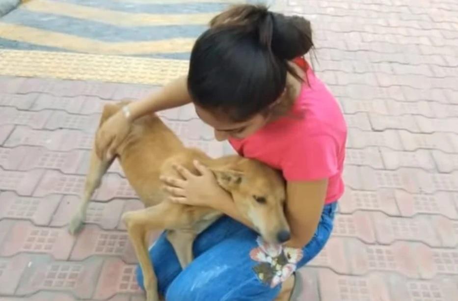 Тощая и беспомощная, собака-мать умоляла о помощи, пытаясь накормить своих детенышей