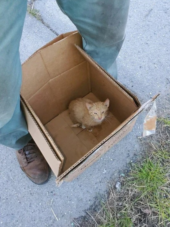 Котенок не переставал благодарить за своё спасение. Он часами обнимал рабочего мусоровоза, который его спас