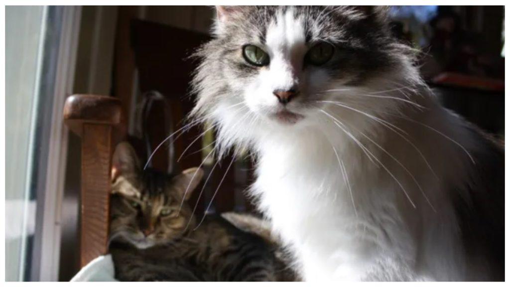 Благодаря своим кошкам, хозяева остались живы