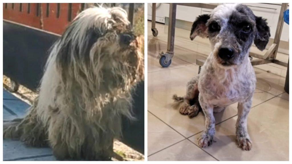 Брошенная собака, оставленная на произвол судьбы, сильно отличалась от собаки, которой она когда-то была