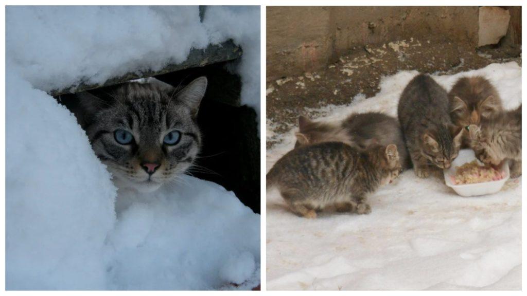 Кошечку с котятами выгнали на улицу в самые сильные морозы с угрозами усыпить животных