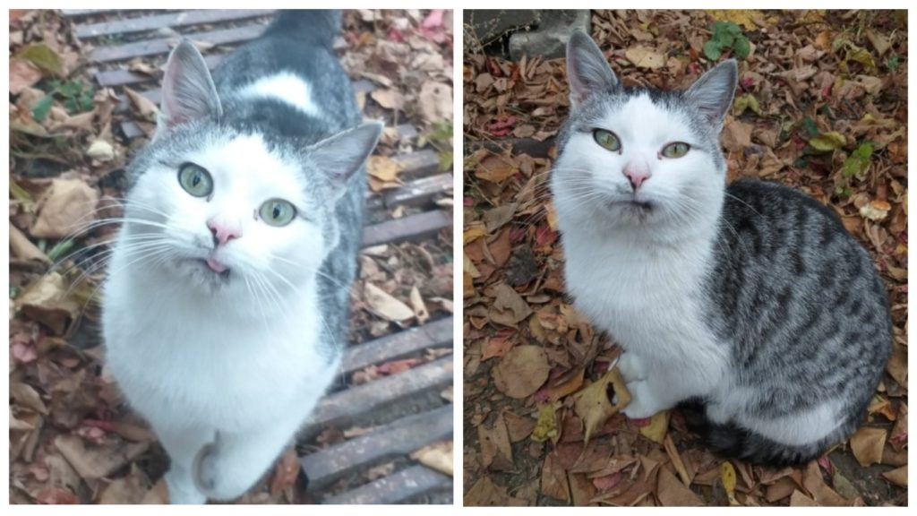 Кот брошенный на дачах, бежал за машиной девушки его покормившей: Он умолял забрать его с собой