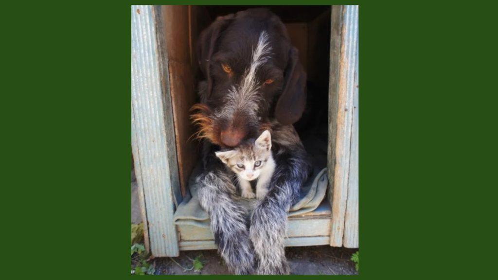 Подброшенный котёнок предпочёл жить в будке со своим новым другом-псом и не хотел перебираться в дом