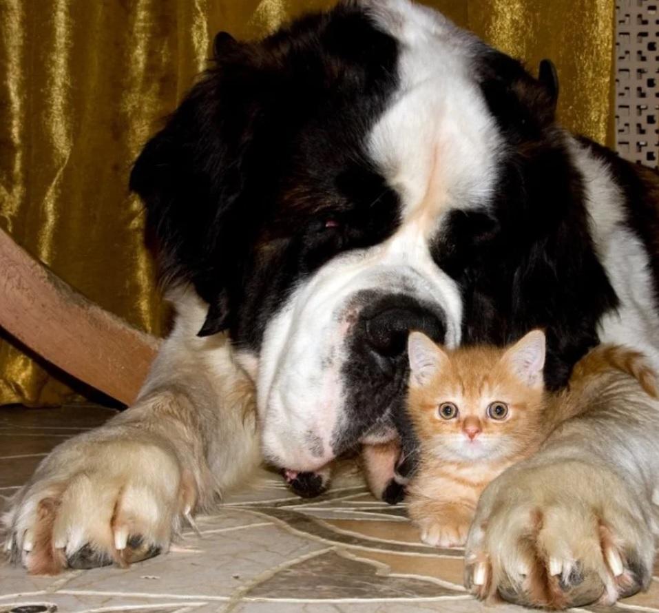 Пёс Федя продолжал гавкать и сердиться - он указывал хозяйке на коробку, в которой, как оказалось, пригрелся котёнок